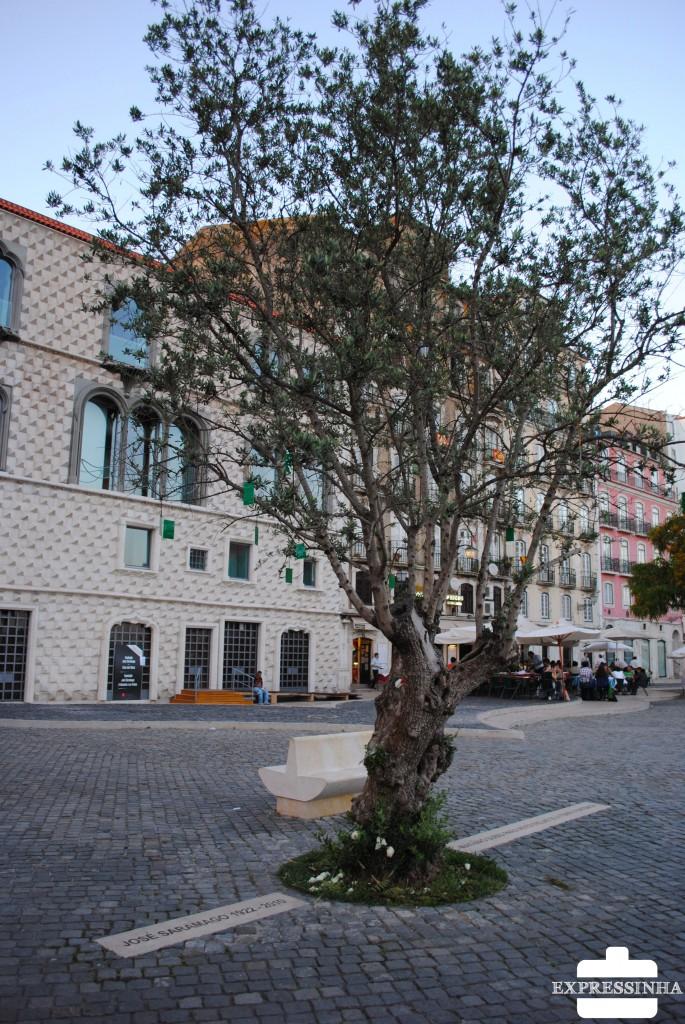 Lisboa, Casa dos Bicos, Oliveira com cinzas de José Saramago, Fundação Saramago