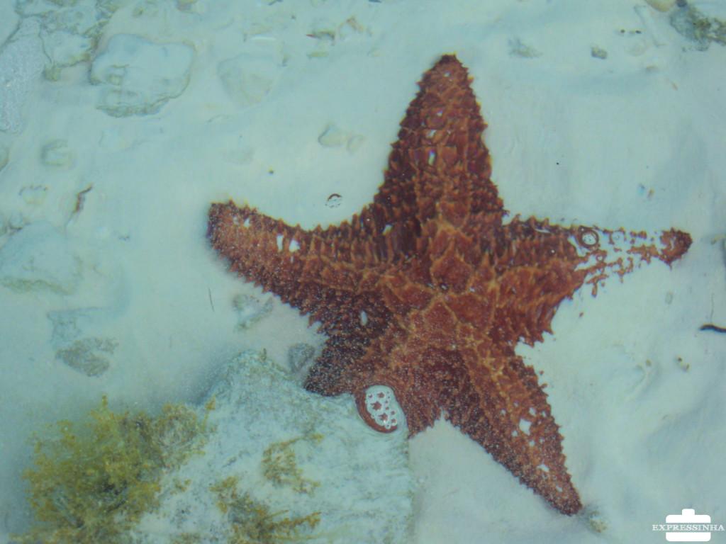 Cuba Cayo Largo Estrela do Mar