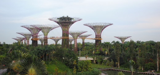 Singapura Supertrees Grove