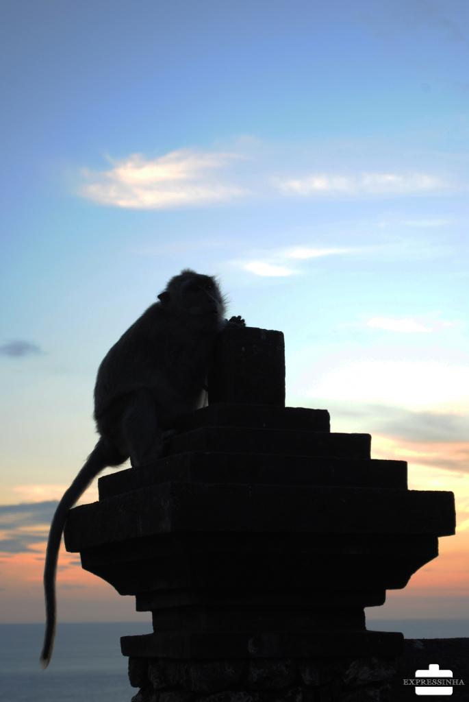 Indonesia Bali Uluwatu Temple Monkeys