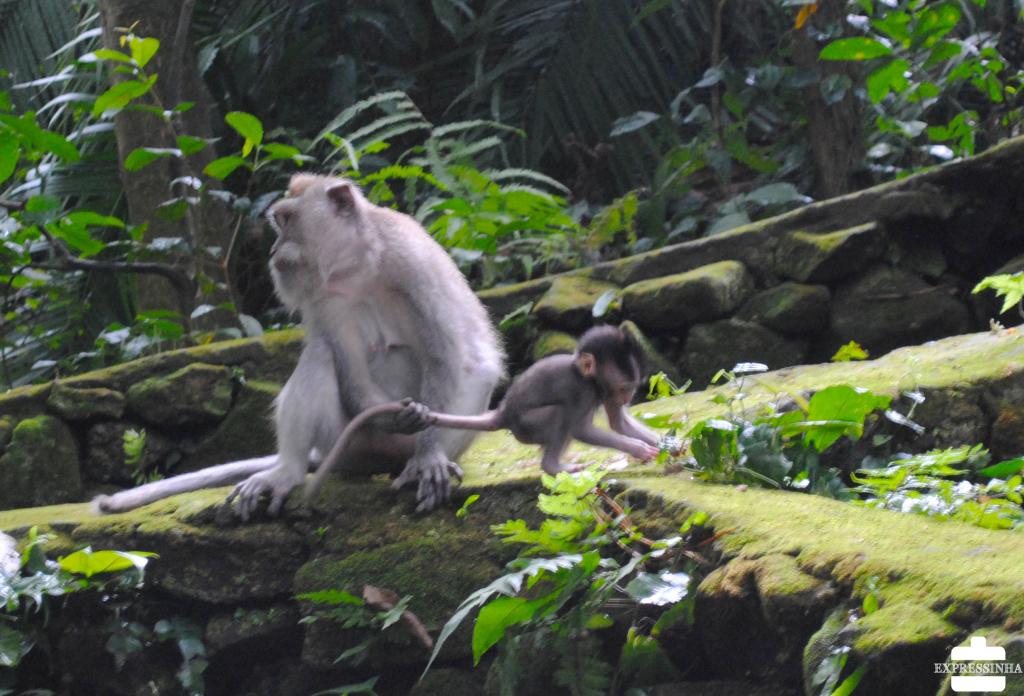 Indonesia Bali Ubud Floresta dos Macacos