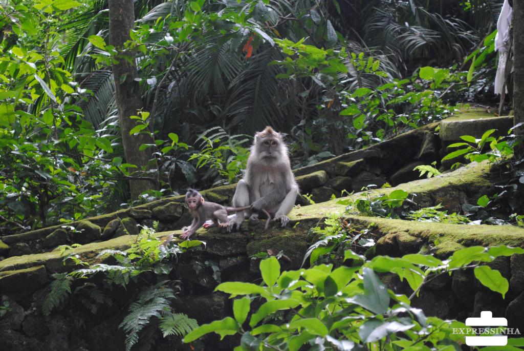 Indonesia Bali Ubud Monkey Forest