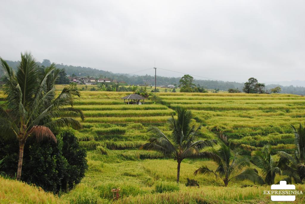 Indonesia Bali Ubud Jatiluwih