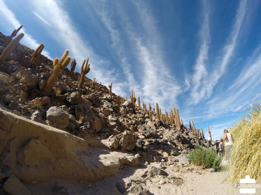 Chile Atacama Cactos