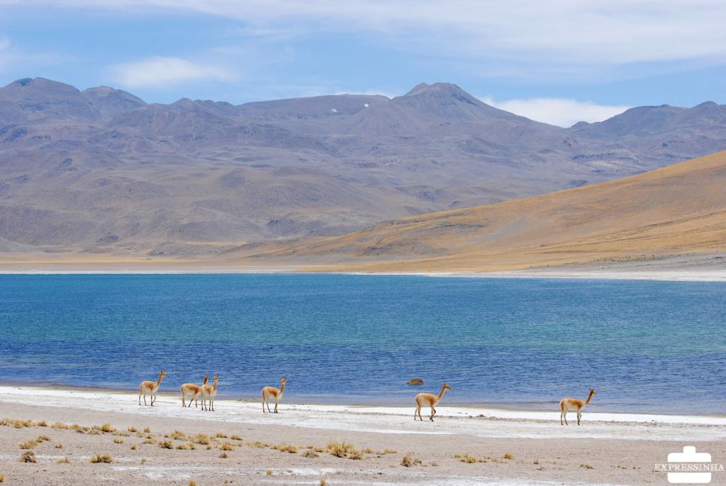 Expressinha Atacama (108)