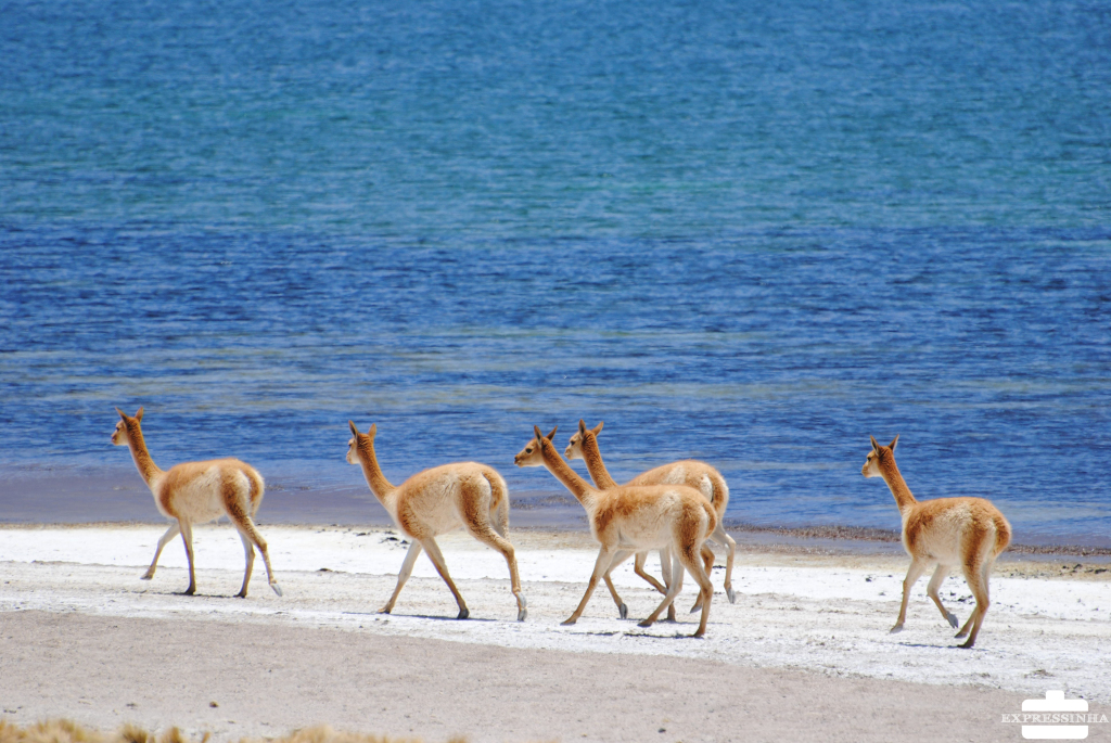 Chile Atacama Lagunas Altiplânicas