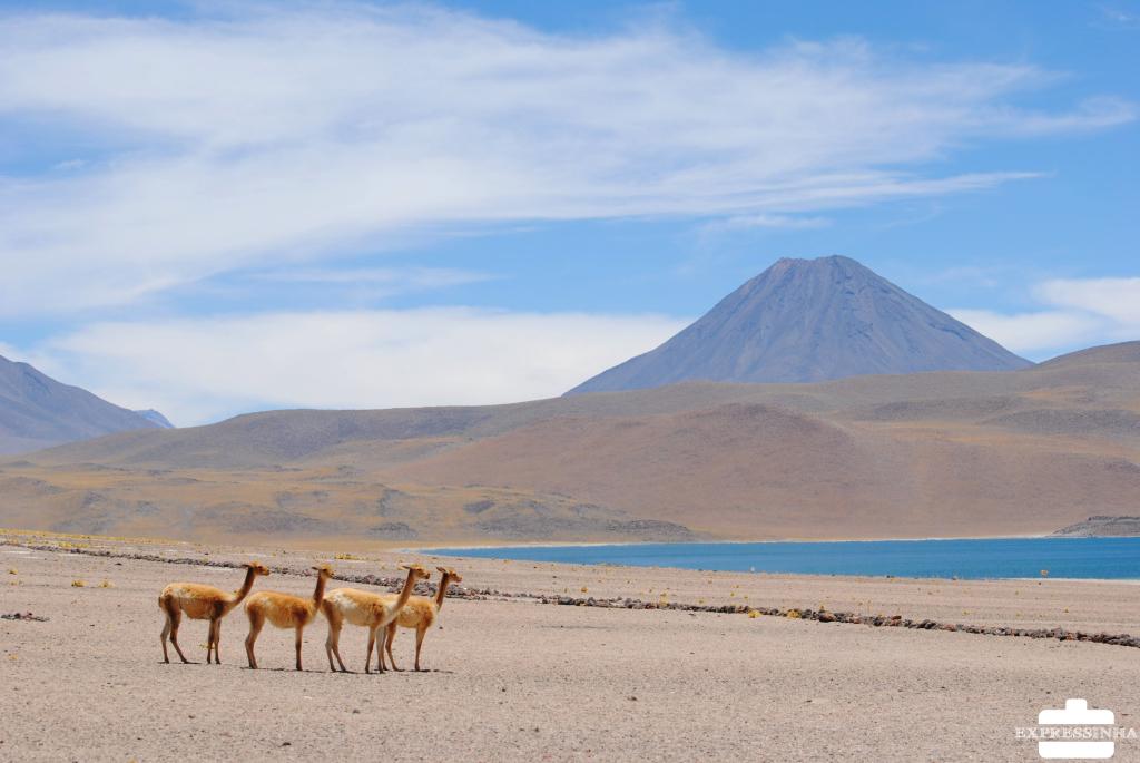 Expressinha Atacama (112)