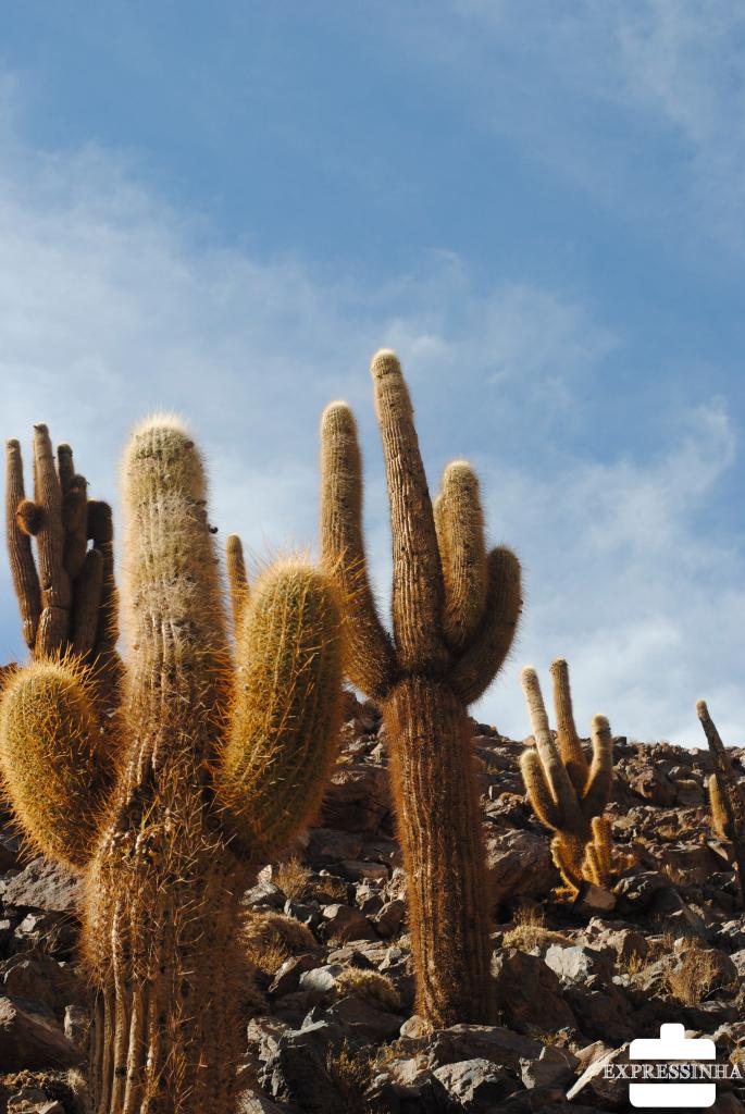 Chile Atacama Vale dos Cactos