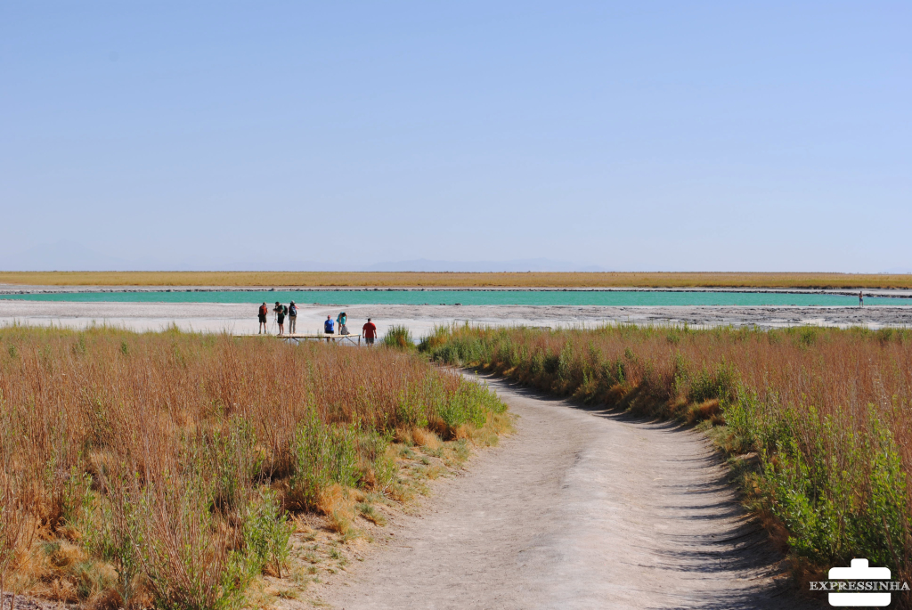 Chile Atacama Laguna Cejar