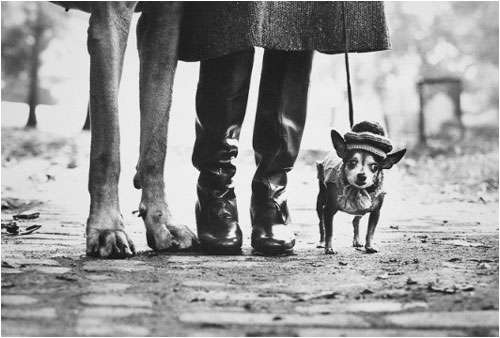 Elliot Erwitt Dog Leggs