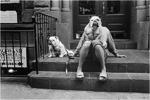 Elliot Erwitt Two Bulldogs