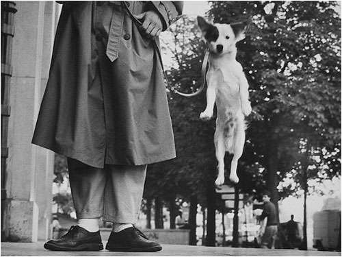 Elliot Erwitt Dog Jumping