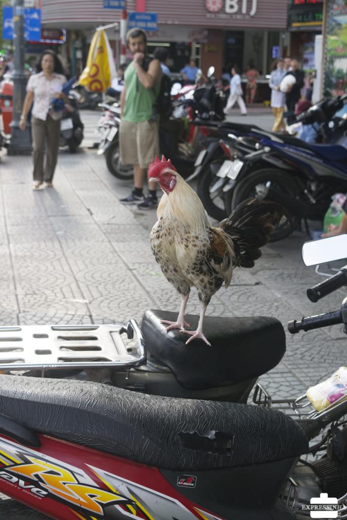 Asia Vietna Motorbike
