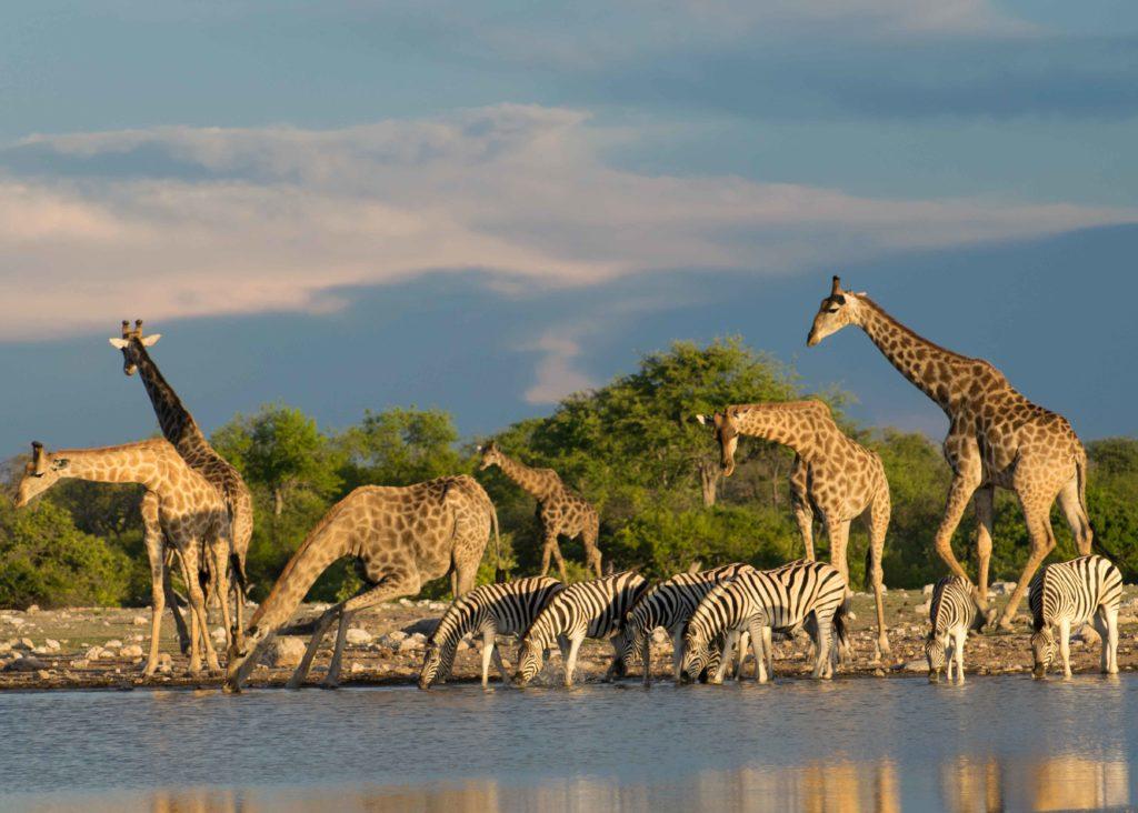 Dicas Da Nambia Roteiro De Viagem Completo Do Sul Ao Norte